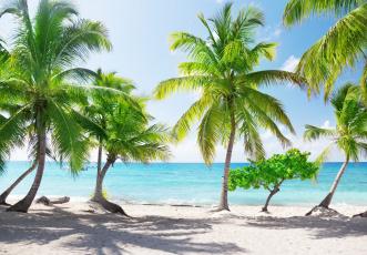 обоя природа, тропики, пальмы