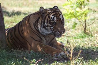 обоя животные, тигры, отдых, камни, тигр, кошка, амурский