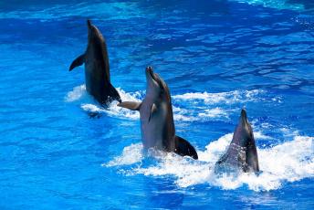 Картинка животные дельфины дельфинарий
