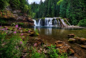 Картинка lower lewis river falls washington природа водопады река льюис лес камни цветы