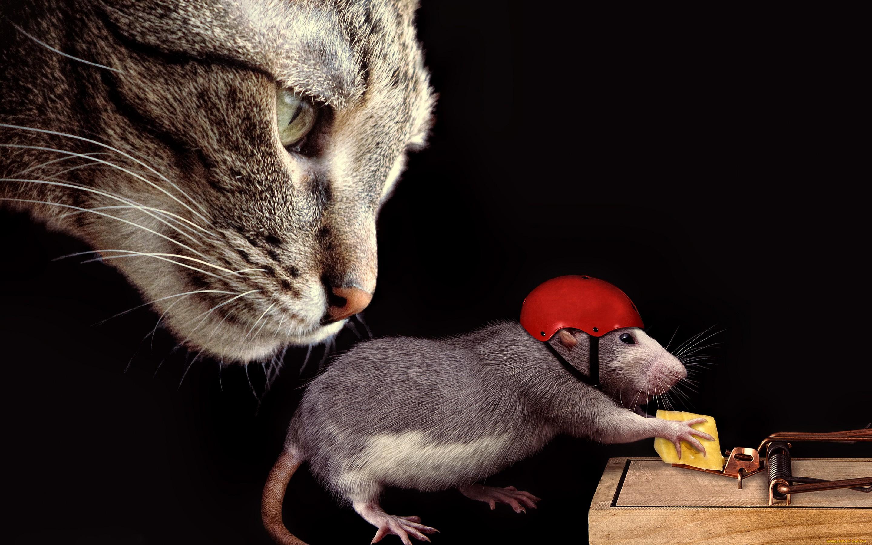 Утро света, прикольные картинки кошка и мышки