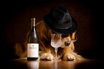обоя юмор и приколы, собака, очки, шляпа, бутылка, бокал