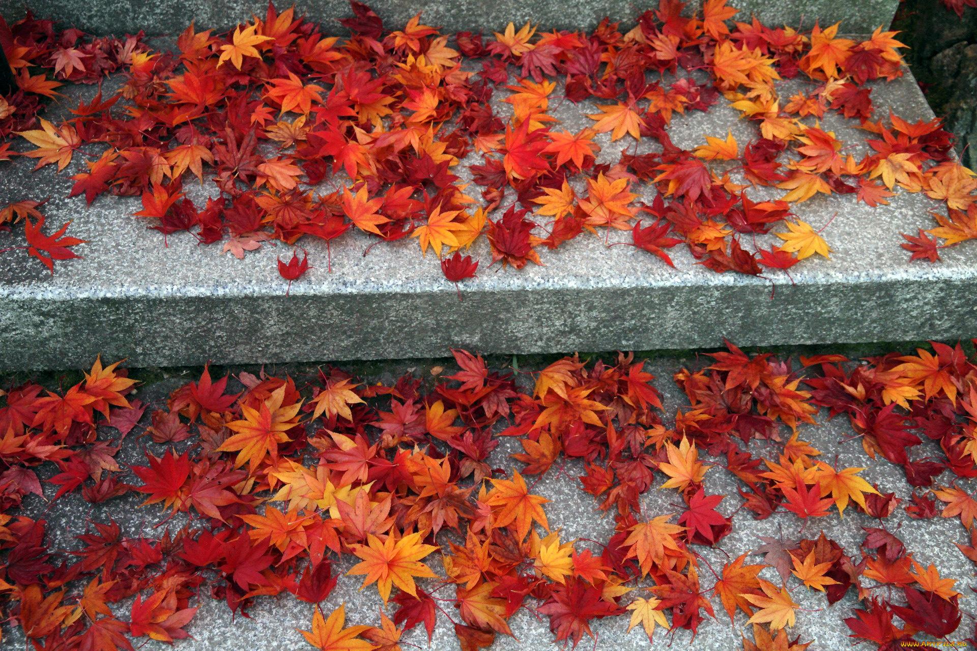 Листья ступеньки осень загрузить