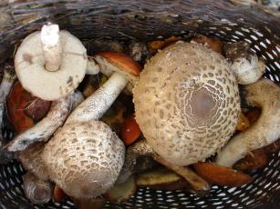еда грибы food mushrooms загрузить