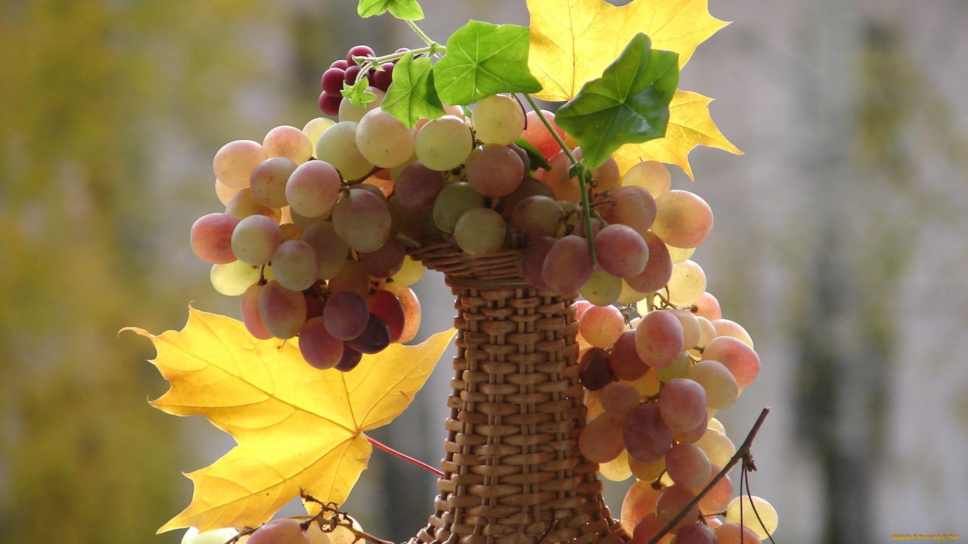 Поздравлением 2016, открытка доброе утро осень виноград