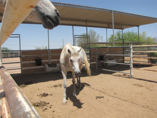Картинка животные лошади лошадь