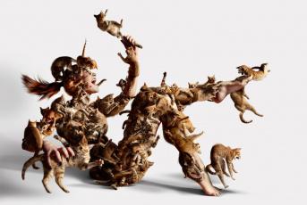 Картинка юмор приколы нападение кошки девушка