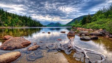 Картинка природа реки озера коряга кустарник отмель лес озеро горы