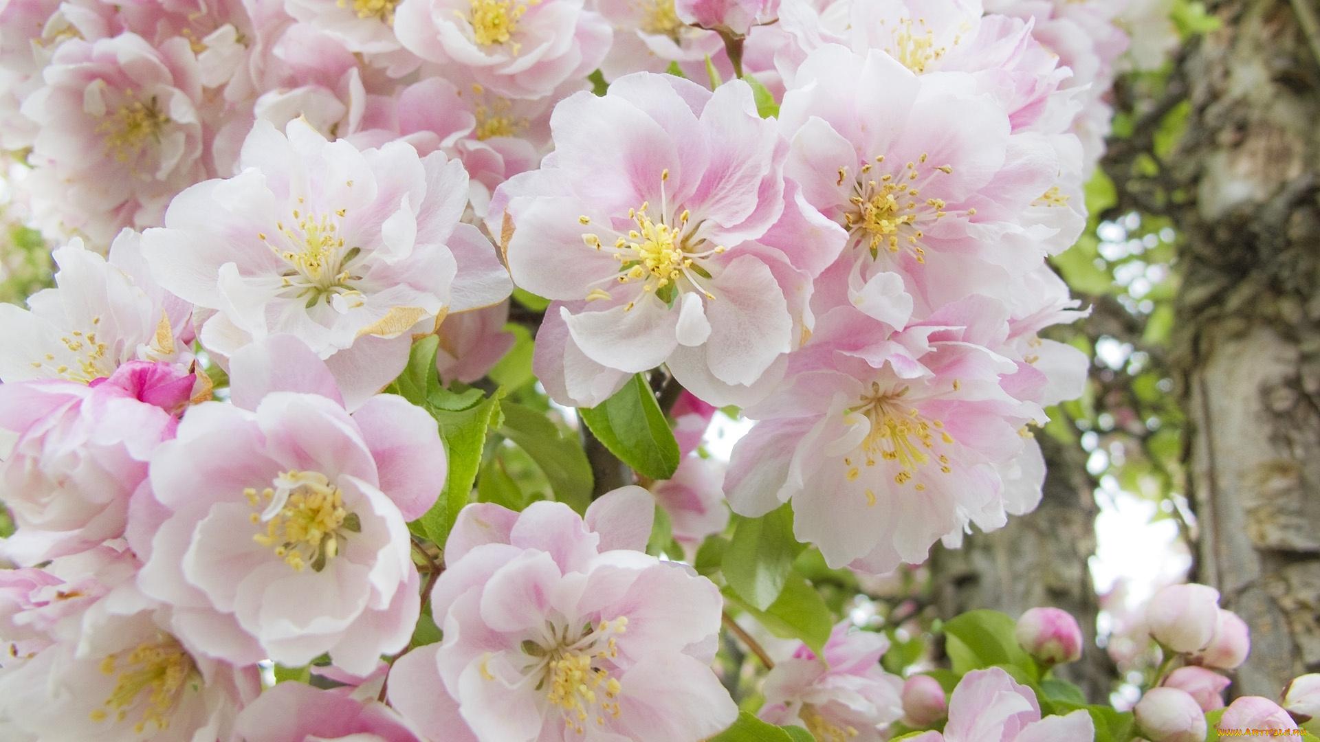 Цветущий сад загрузить