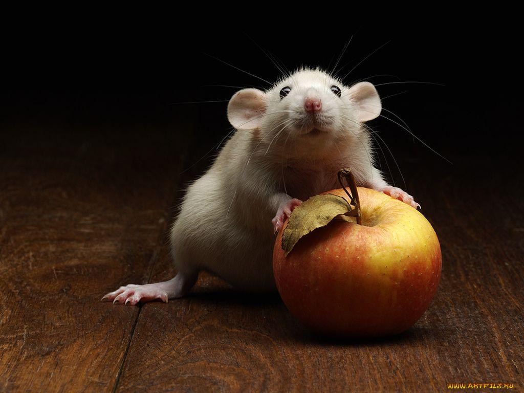 Смешные картинки с мышонком