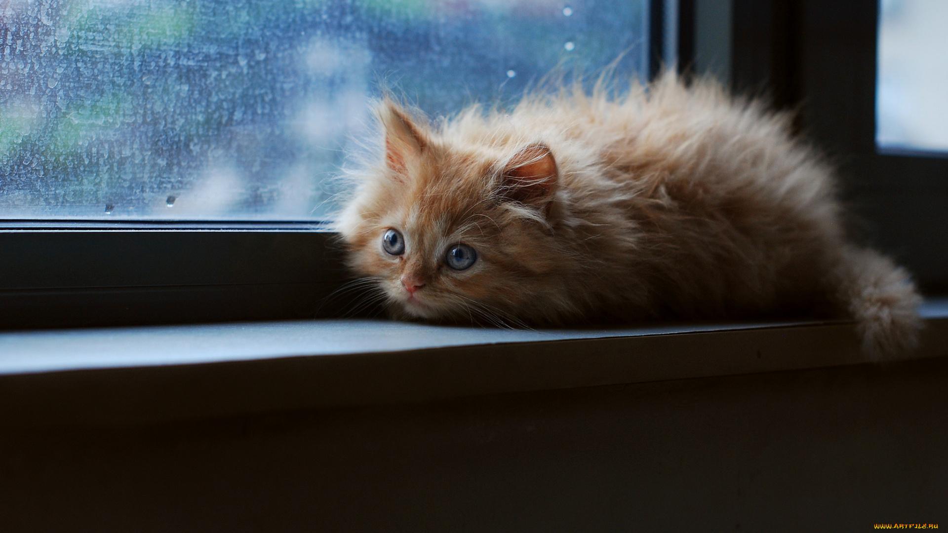 котята на окне kittens on the window  № 3063242 бесплатно