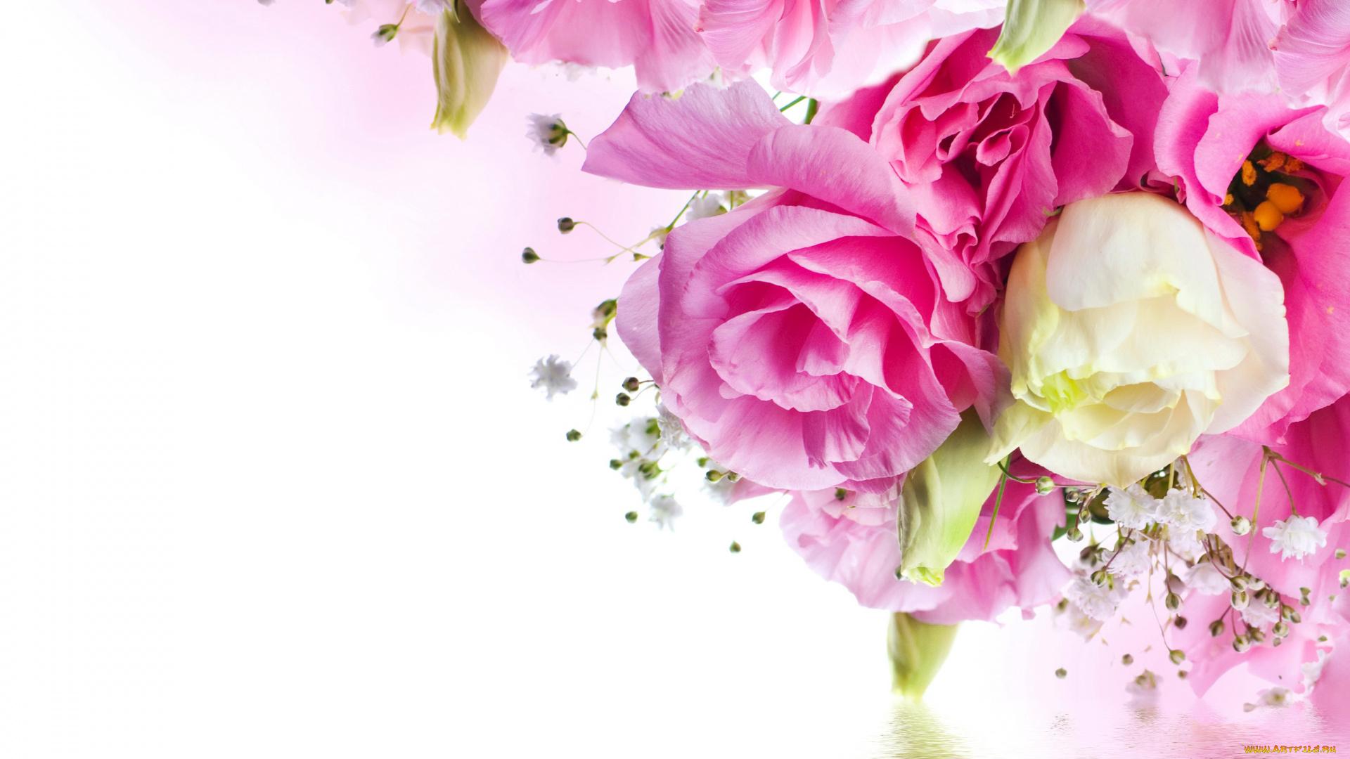 телескоп фон для открытки розовые розы котором побеждает