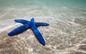 обоя животные, морские звёзды, морская, звезда, starfish, ocean, underwater, sand