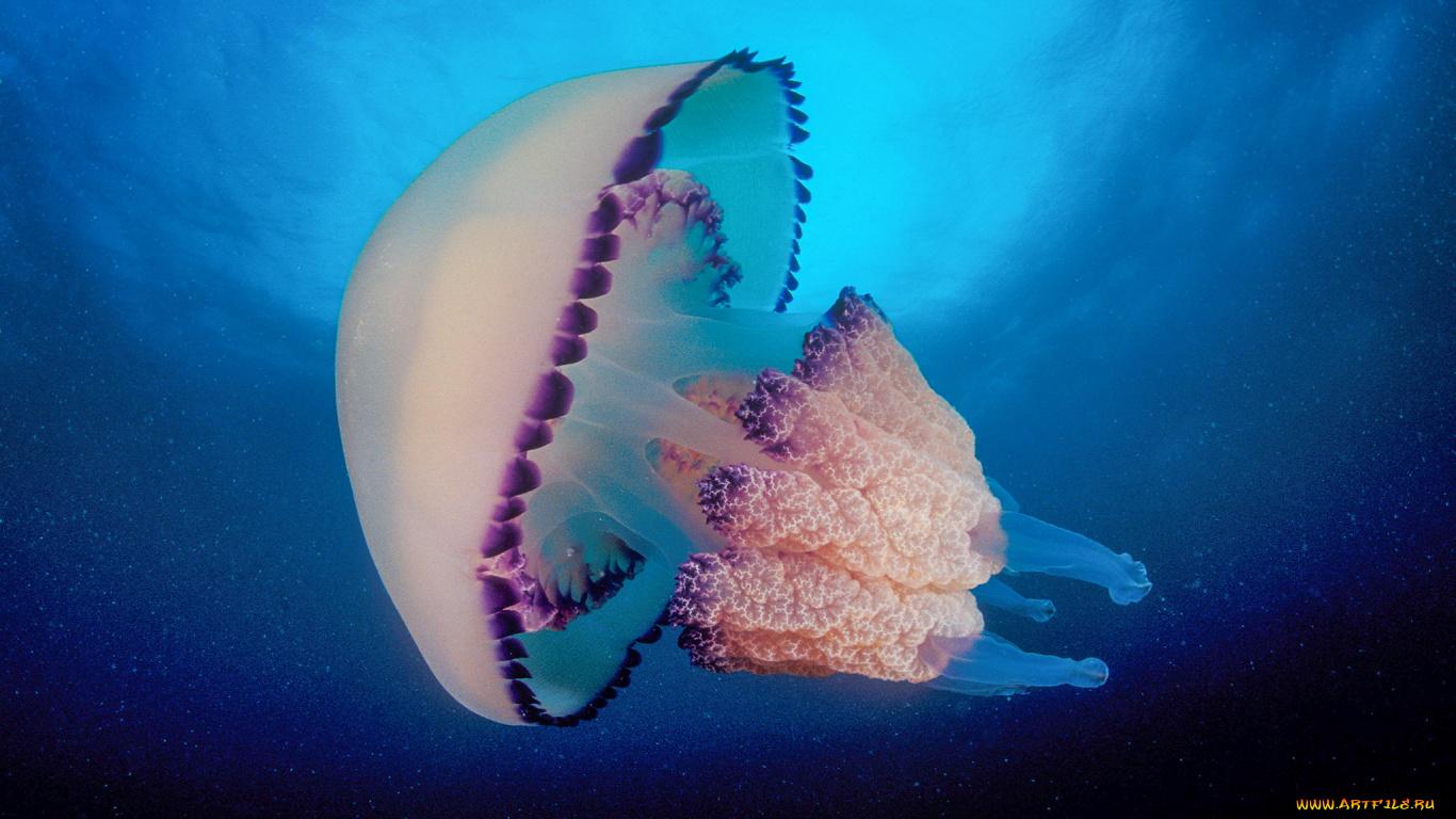 oboi-golih-meduz-gorgon