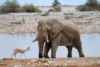 обоя животные, разные вместе, слон
