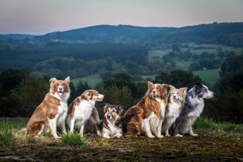 обоя животные, собаки, фон, природа