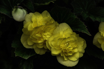 обоя цветы, цветок