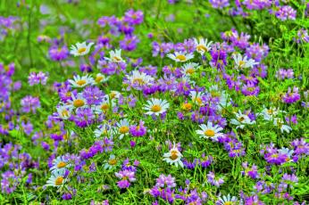 обоя цветы, луговые , полевые,  цветы, лепестки