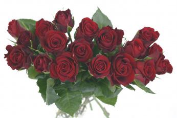 обоя цветы, розы, бордо