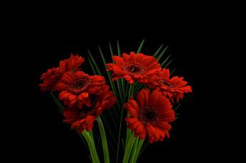 обоя gerbera, цветы, герберы, букет