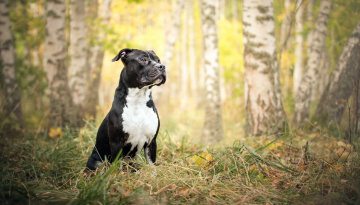 обоя животные, собаки, собака, взгляд, осень, природа, друг
