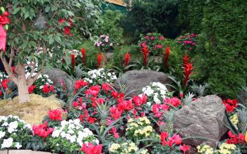 обоя цветы, разные вместе, камни, цикламен, азалия, ананасы