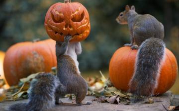 обоя юмор и приколы, праздник, тыквы, halloween, белки