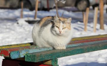 Картинка животные коты лавочка кошка кот зима коте киса