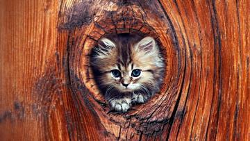 обоя животные, коты, дупло, котенок, дерево