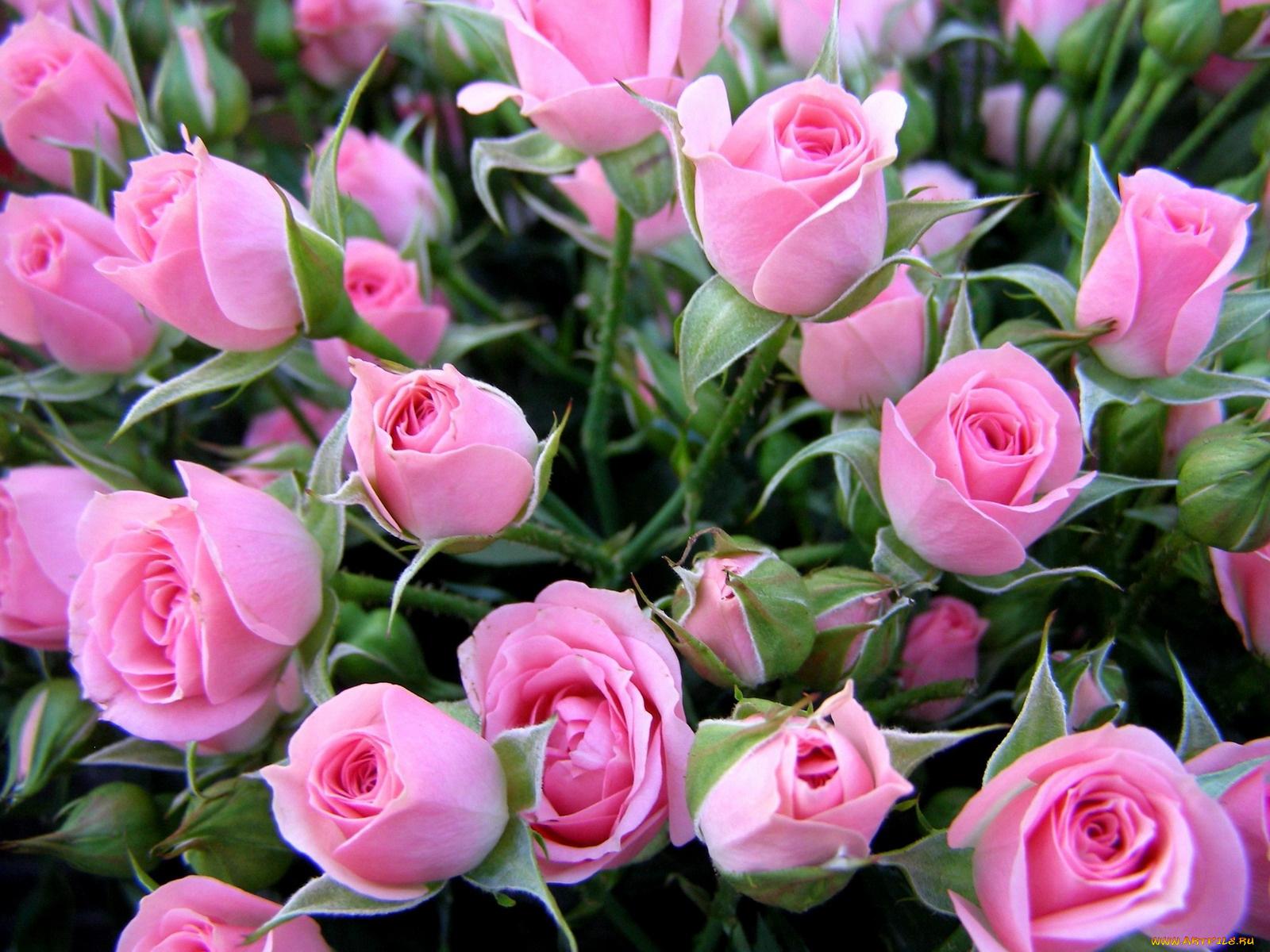 Открытка с днем рождения девушке цветы красивые
