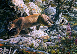 Картинка silent passage рисованные carl brenders painting cougar forest mountain lion mountains rocks beast of prey cat animal