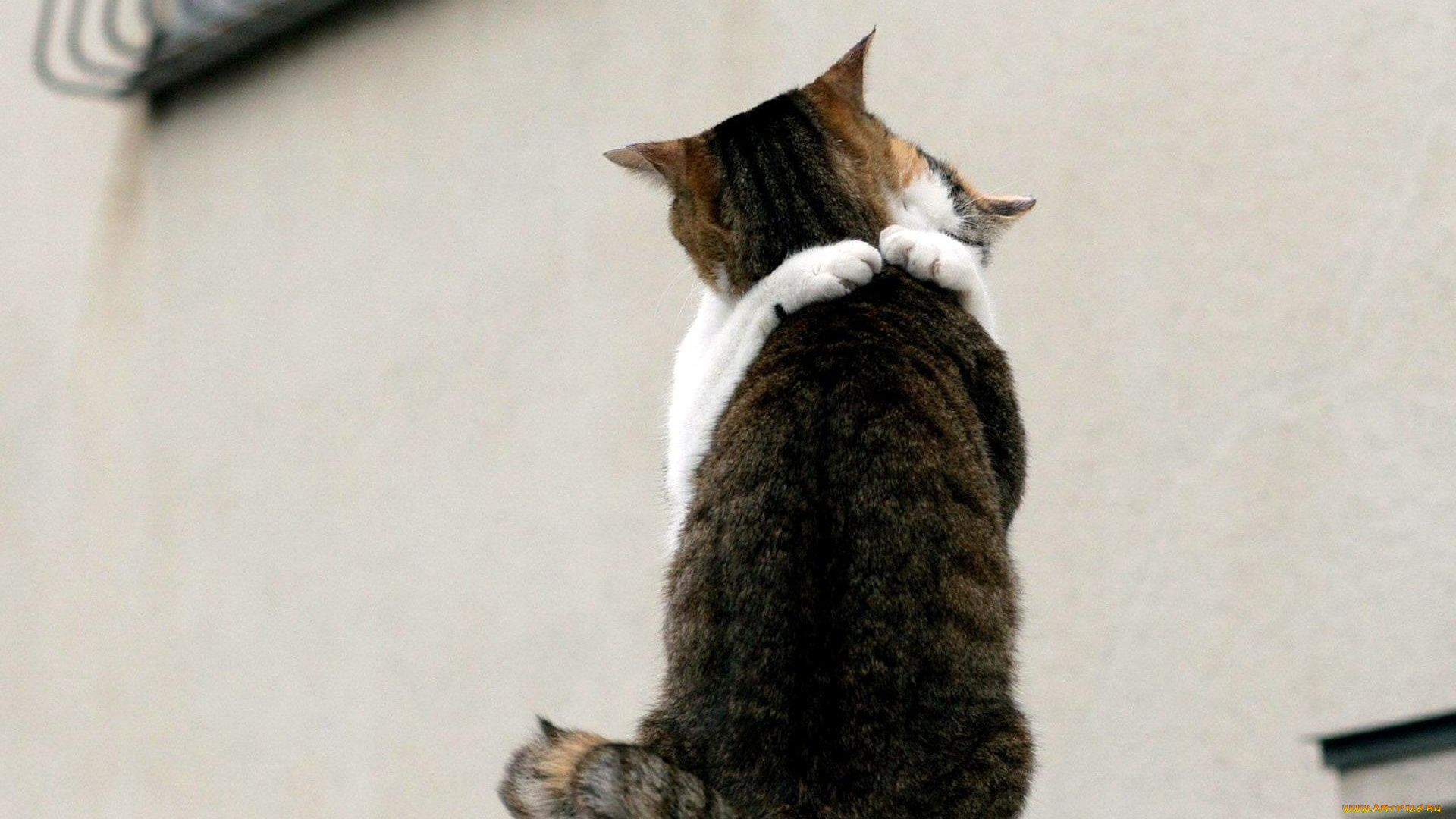 картинки вот так обниму тебя кошки фото ортопед придавлен
