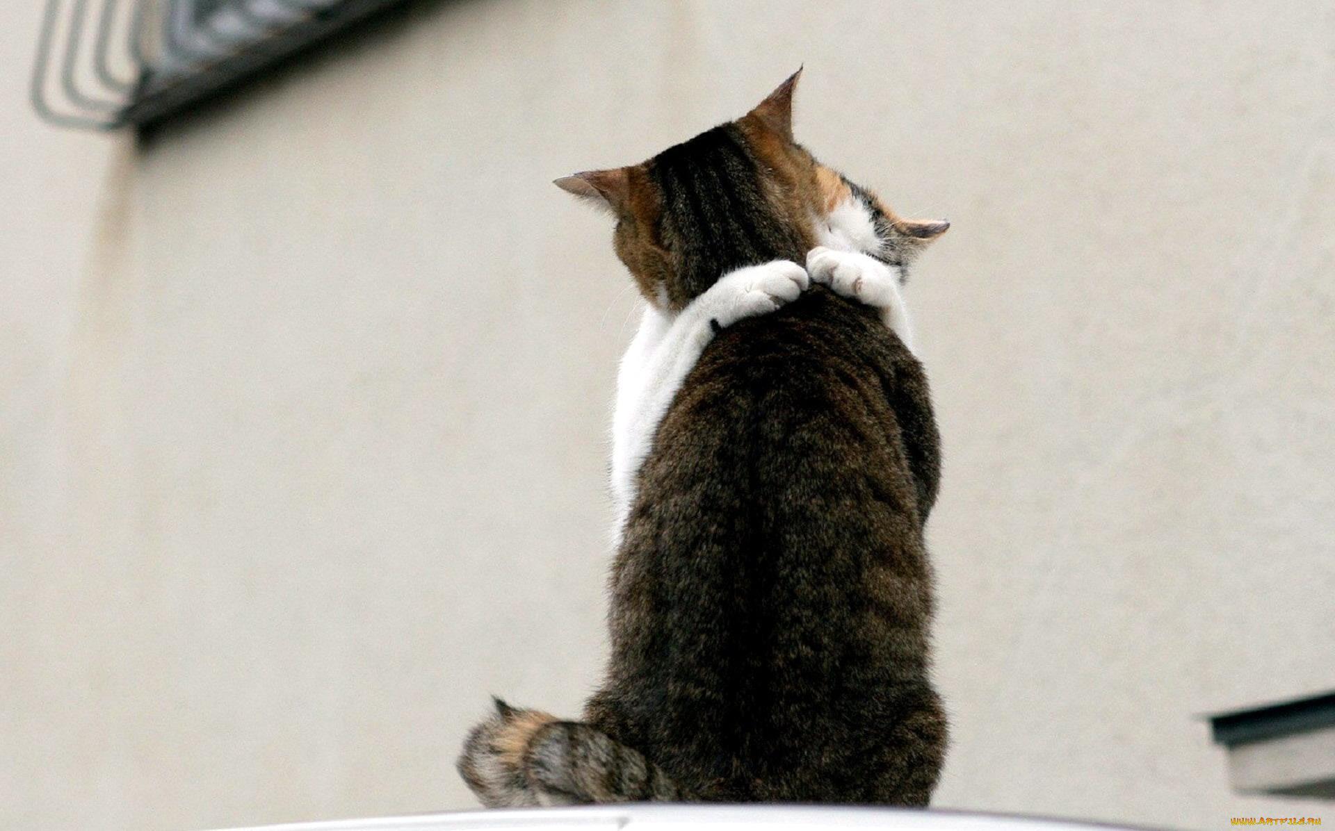 Фото с надписью не могу без тебя, коты