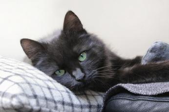 Картинка животные коты кошка взгляд фон
