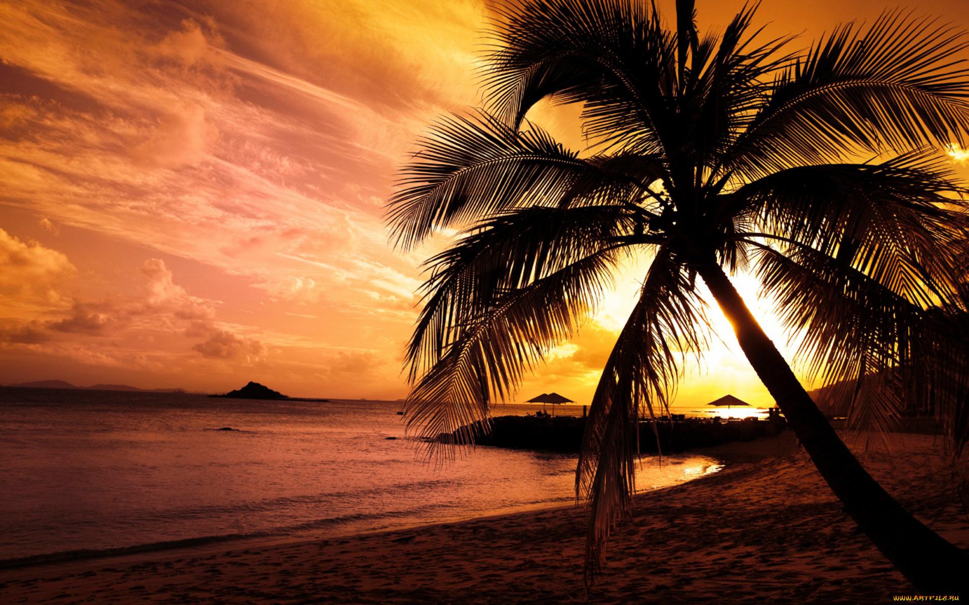 природа бассейн рассвет солнце пальмы отдых  № 2455767 без смс