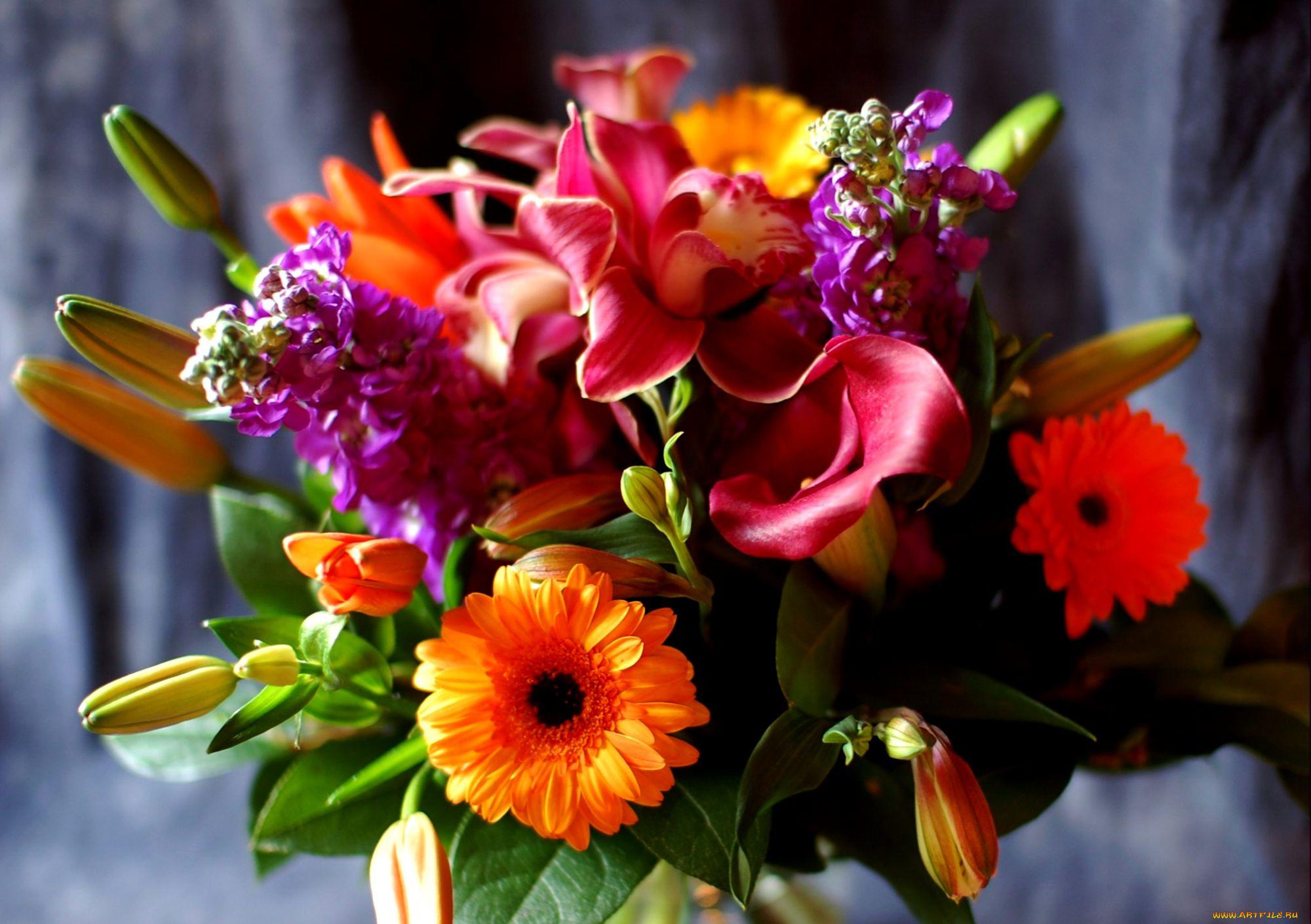 Сделать картона, картинка с очень красивыми цветами