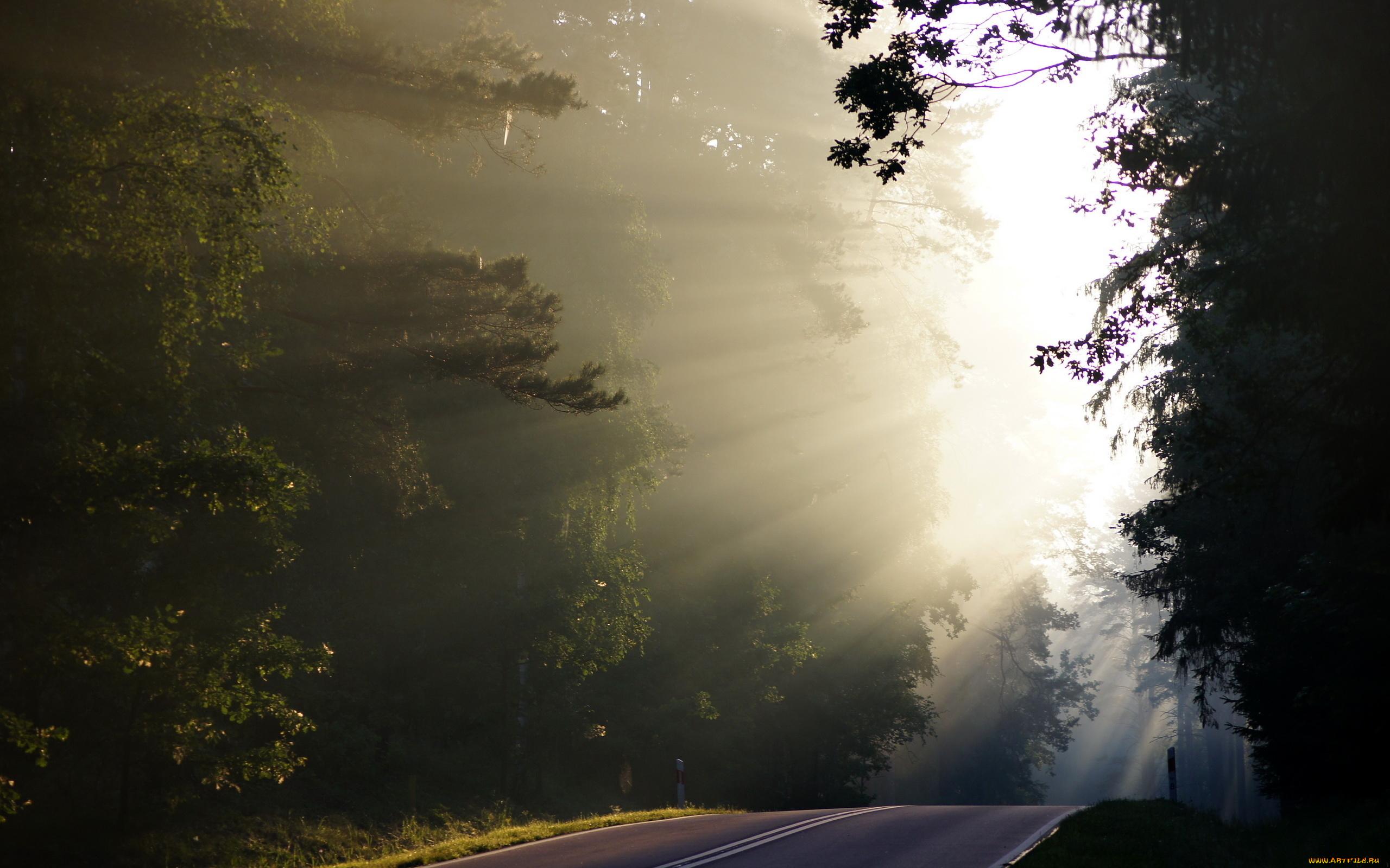 Рассвет туман дорога деревья загрузить