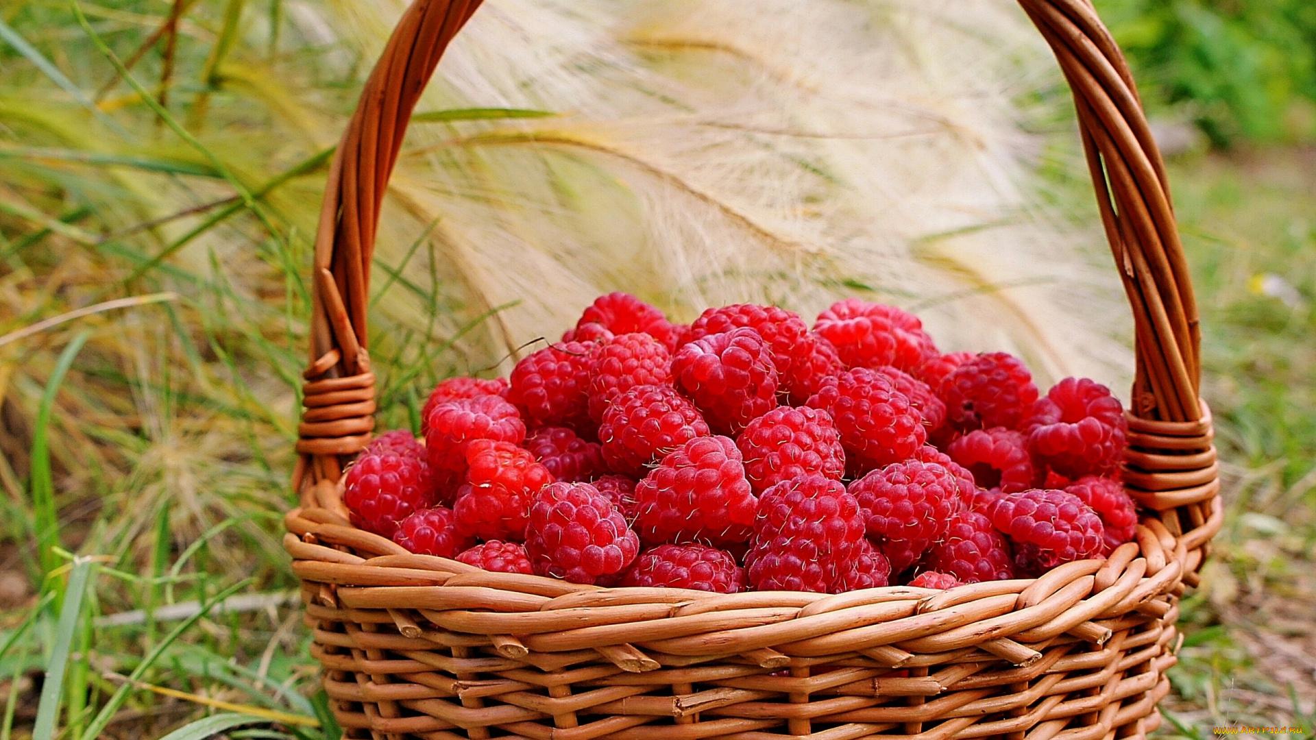 Месяц, гифы ягоды