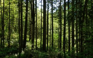 Картинка природа лес лето зелень трава деревья кусты