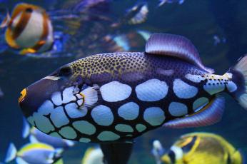 обоя животные, рыбы, рыба, цвет, пятна, подводный, мир