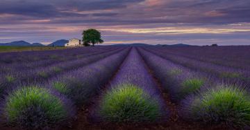 обоя цветы, лаванда, вечер, дом, поле, небо, плато, валенсоль, облака, прованс