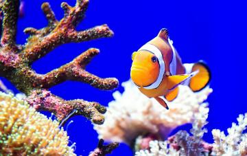 обоя животные, рыбы, океан, море, цвет, рыба, кораллы