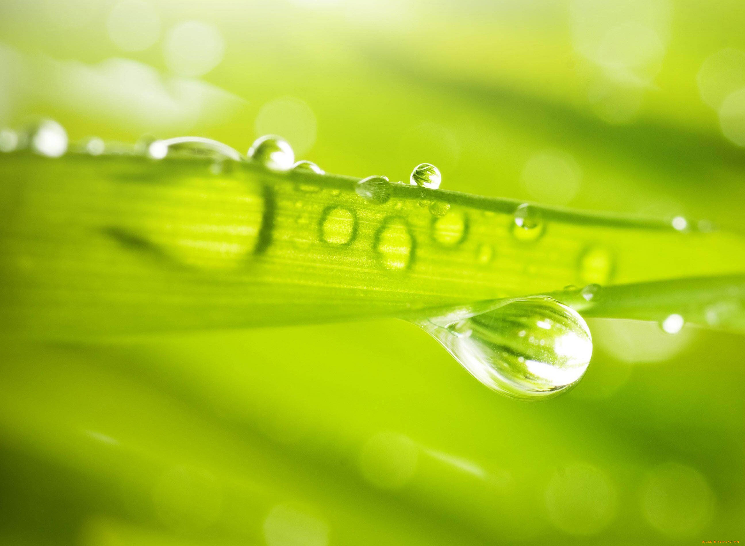 природа роса вода капли макро трава nature Rosa water drops macro grass скачать