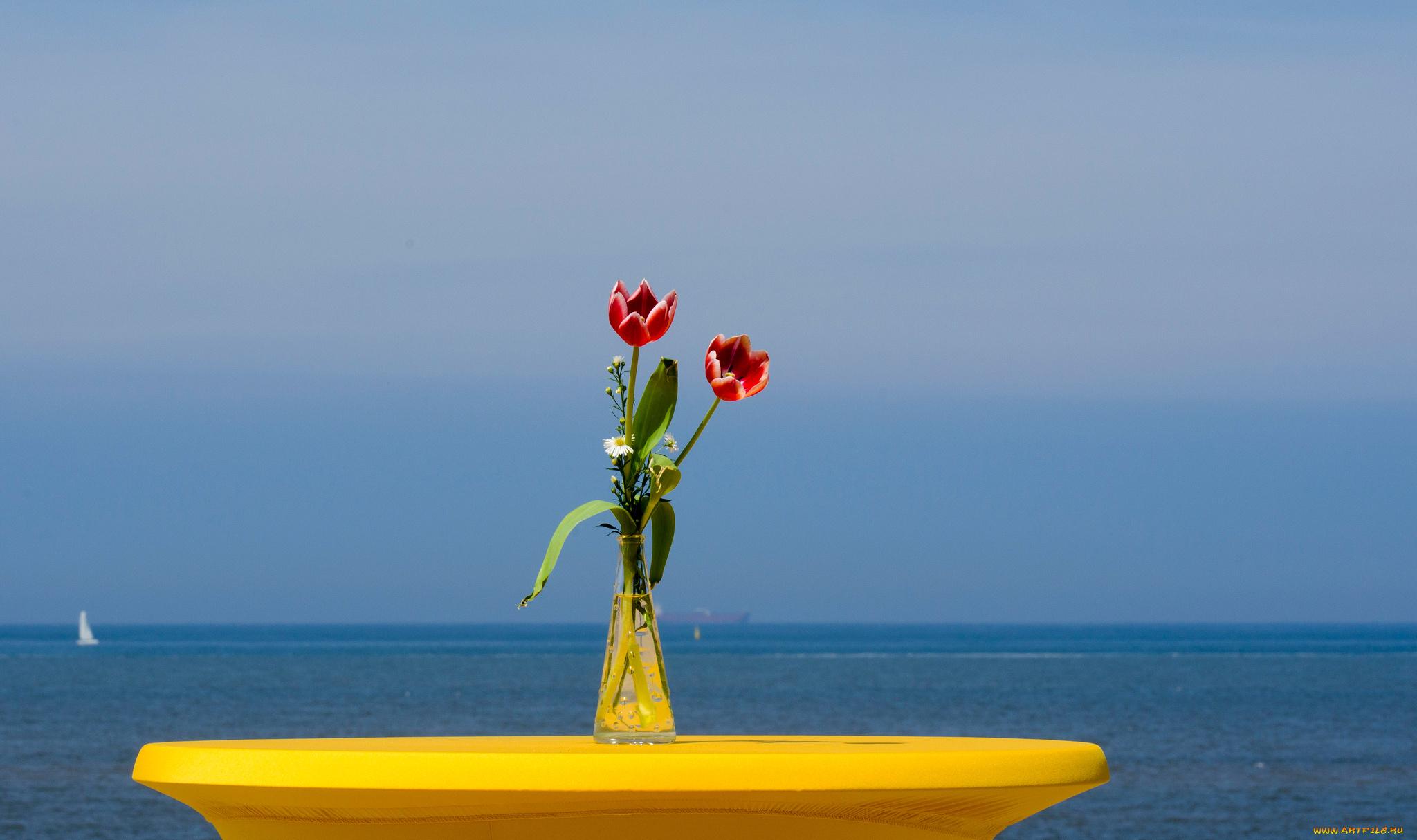 тюльпаны ваза море  № 1012792  скачать