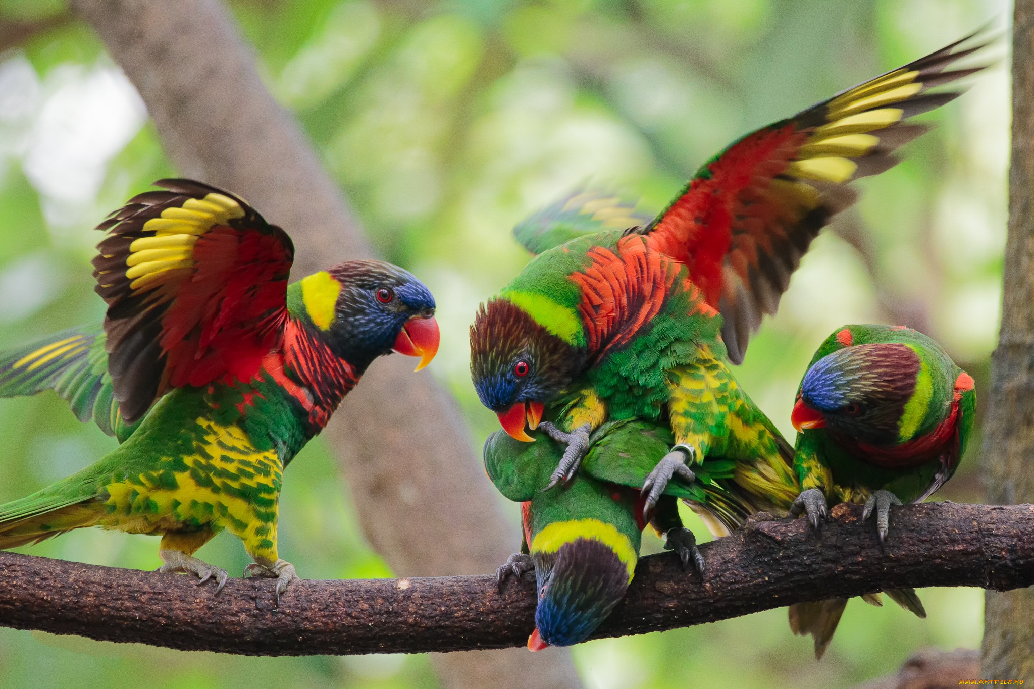 разноцветные птицы фотографии выставлении этого режима