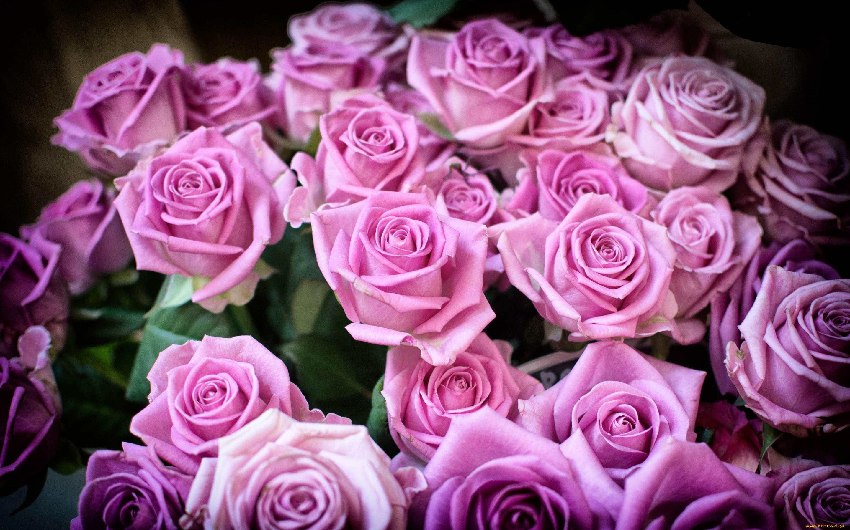Для, показать картинки красивые цветы