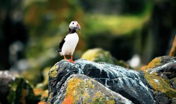 обоя животные, тупики, птица, камни, добыча