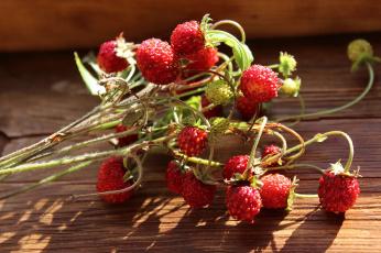 обоя еда, клубника,  земляника, растения, макро, земляника, ягоды, флора