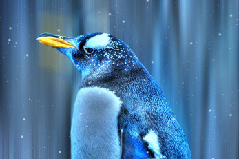 Картинка животные пингвины снег птица