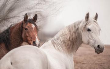 обоя животные, лошади, природа, кони, фон
